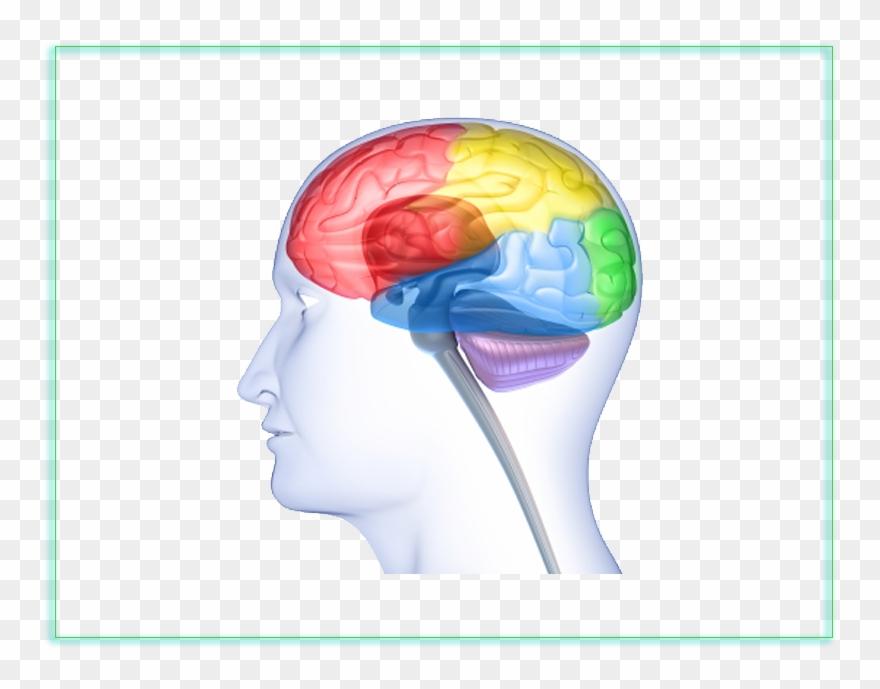 Download neuroscience . Clipart brain neurology