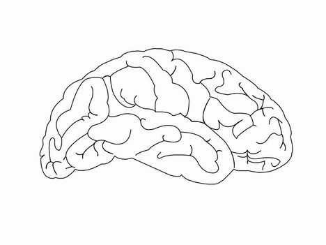 Brain clipart printable. Free blank download clip