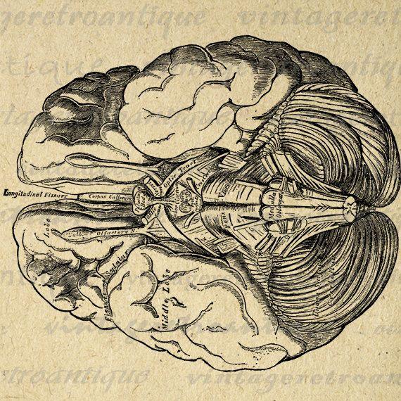 Brain clipart printable. Digital image medical diagram