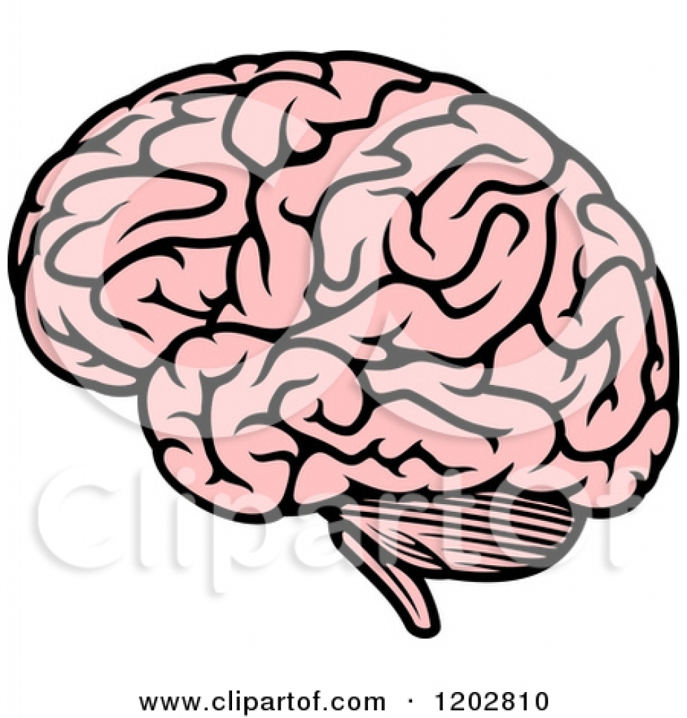 Human free download best. Brain clipart printable
