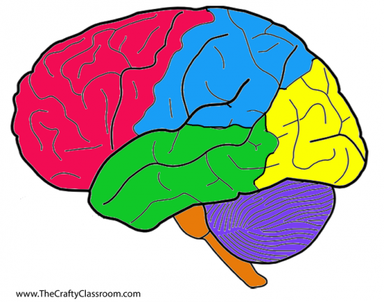 Free blank download clip. Brain clipart printable