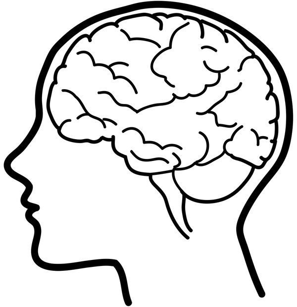 Pin by silvia opjakov. Brain clipart simple