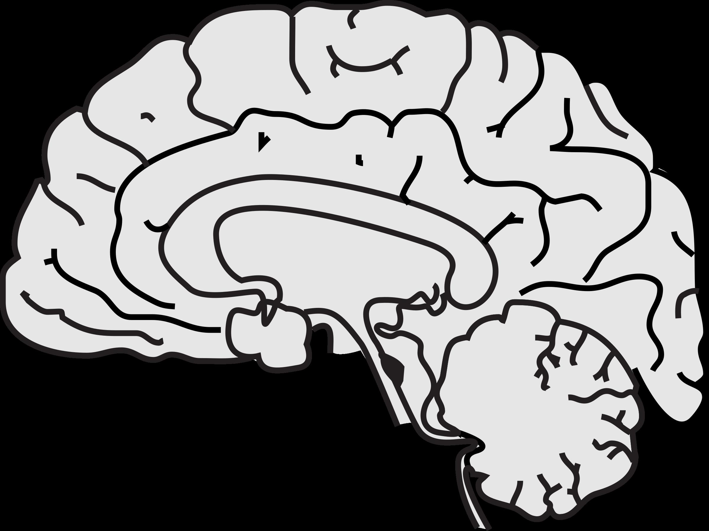 Simple big image png. Clipart brain pdf