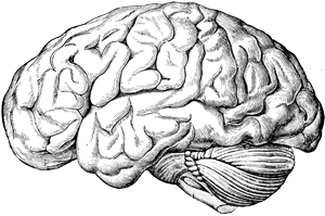 Brain clipart transparent background. Png images all