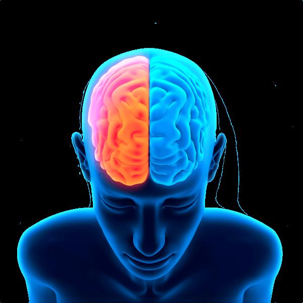 Person clipart brain. Transparent png images stickpng