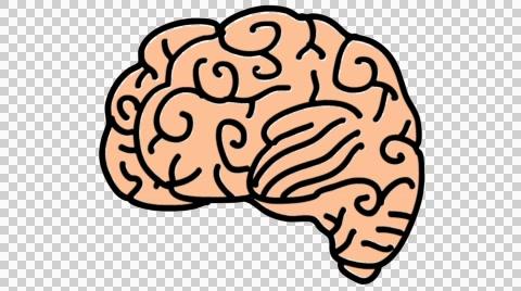 Download Brain Clipart Transparent Background