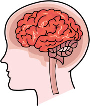 Brain clipart. Search results for human