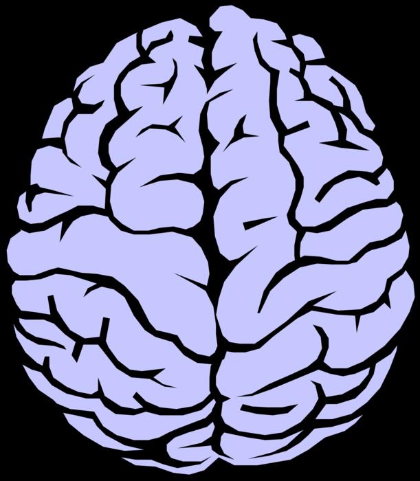 Brain vector png. Human image illustration of