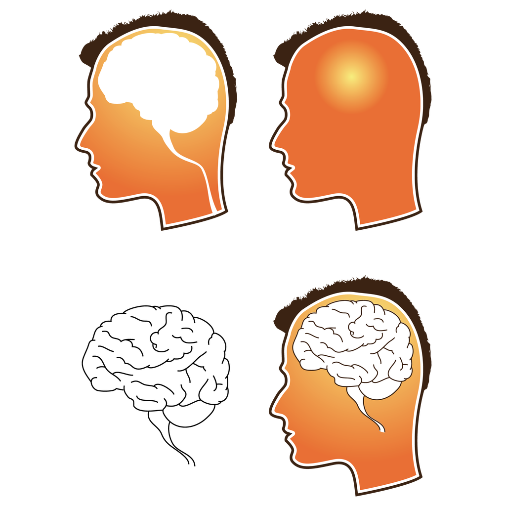 The human free download. Brain vector png