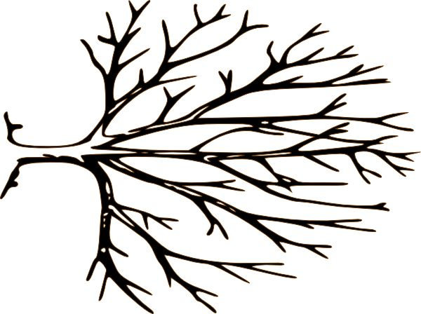 Branch clipart clip art tree. Silhouette at getdrawings com