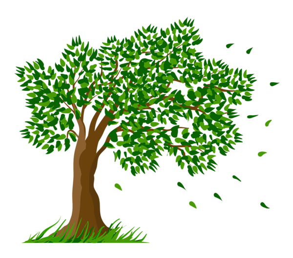Branch clipart clipart transparent background.  collection of trees