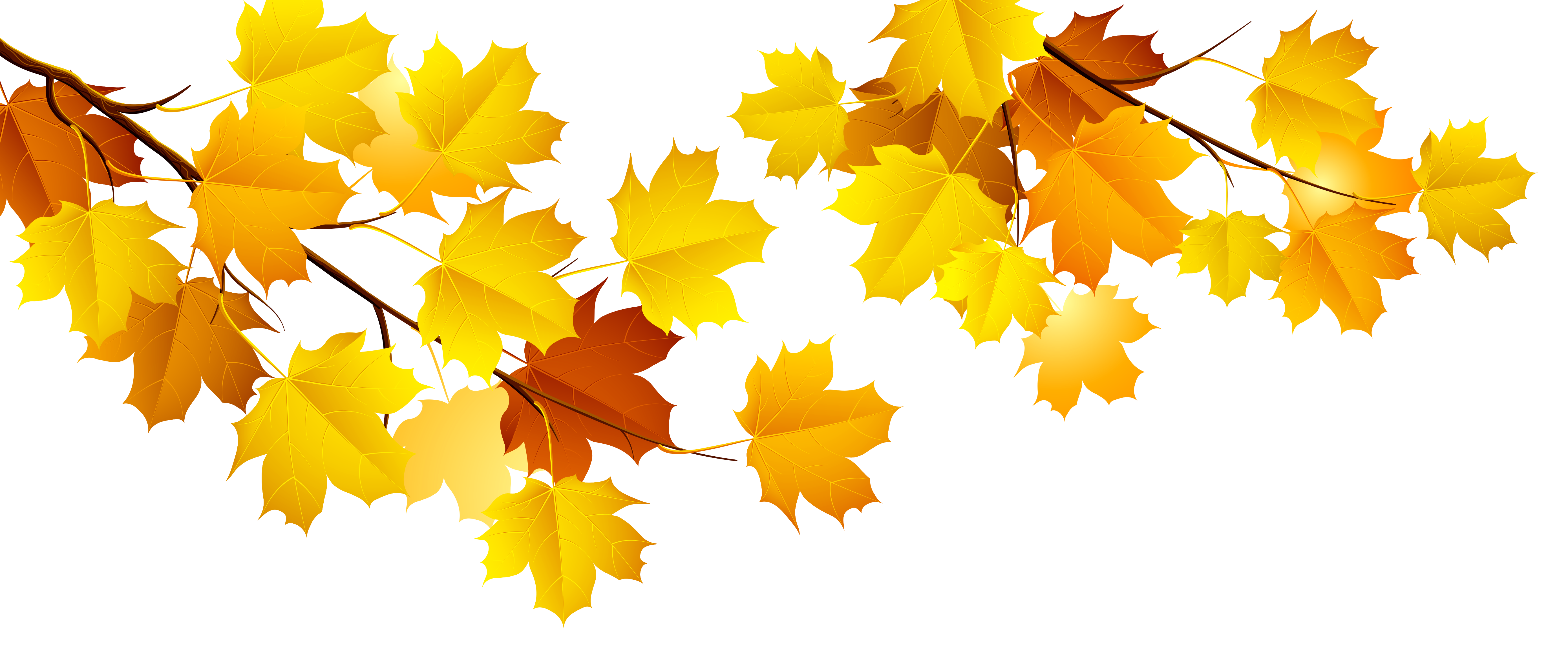 Clipart fall deciduous tree. Autumn branch png gallery