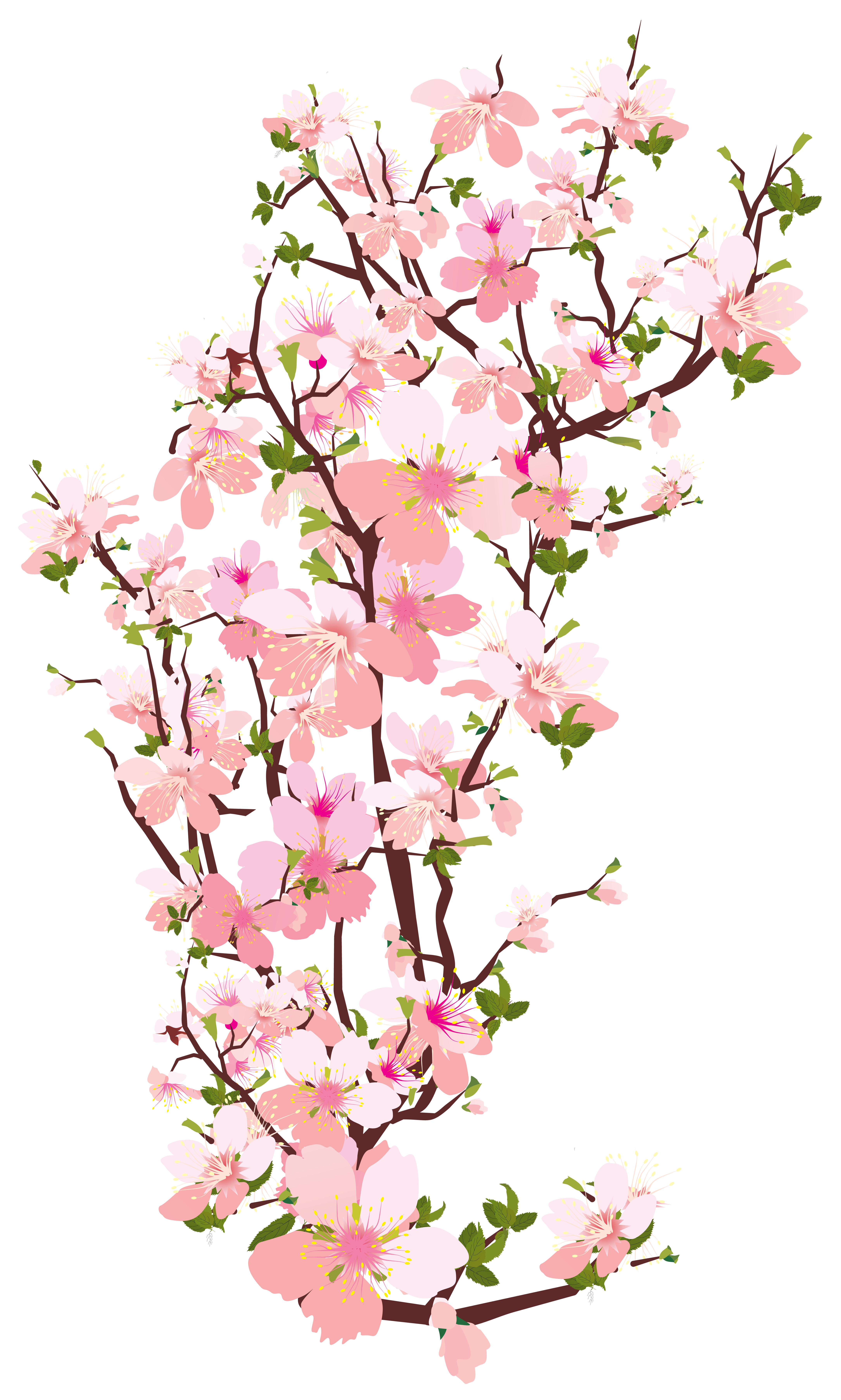 Spring tree transparent png. Clipart rose branch