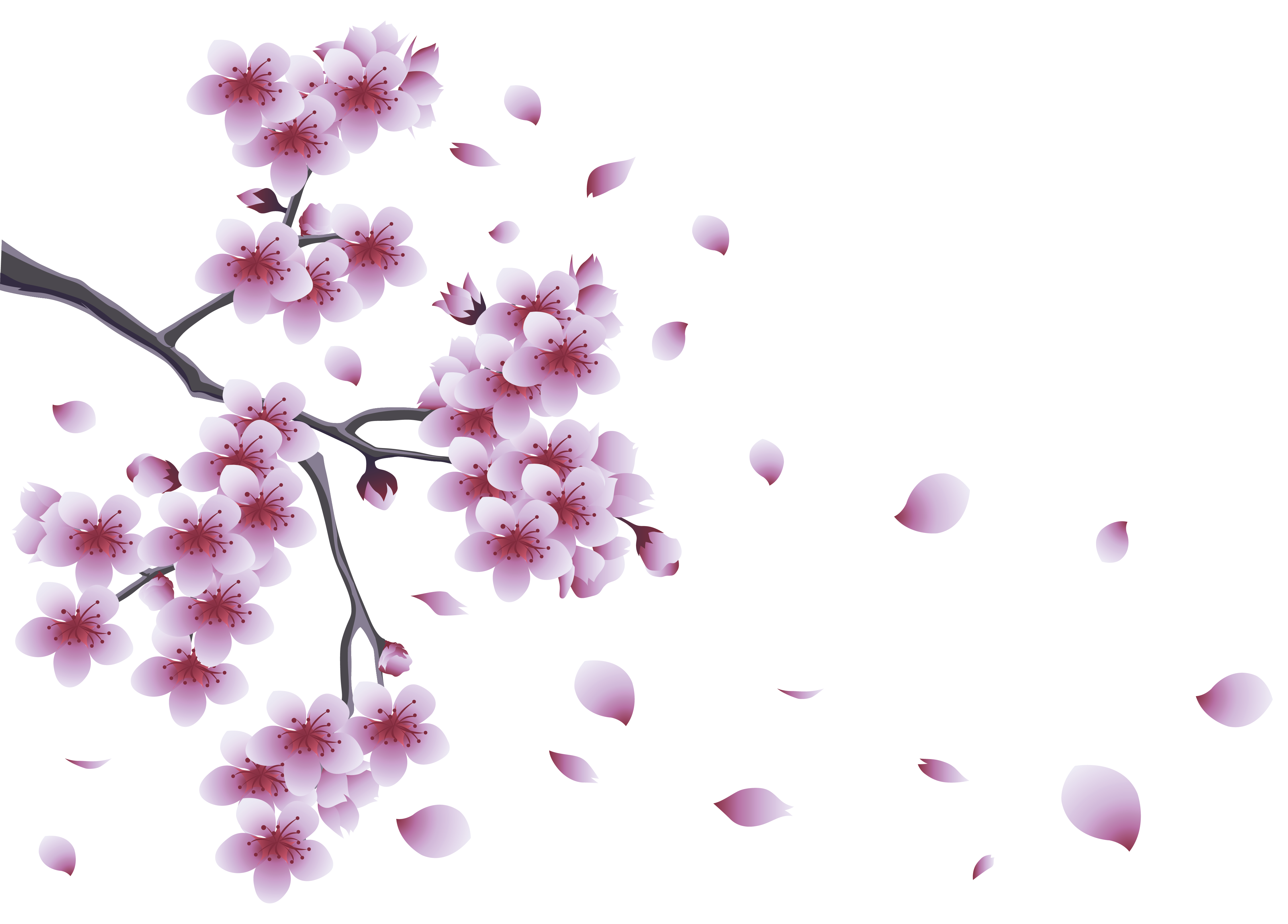 Spring with tree flowers. Flower branch png