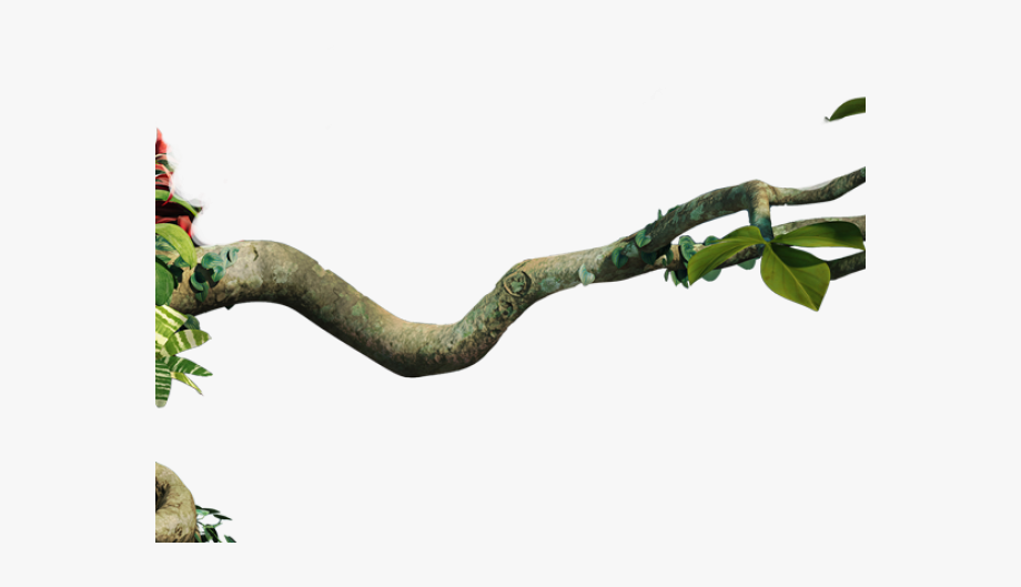 Tree png . Branch clipart jungle