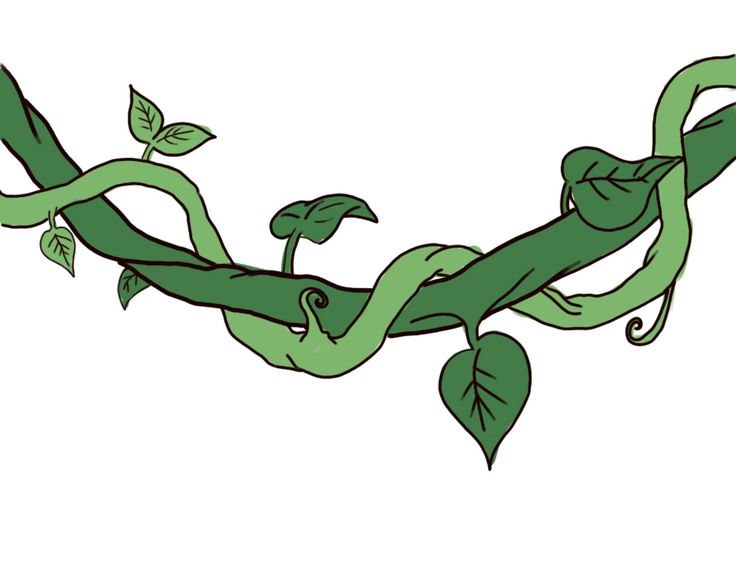 Branch clipart jungle.  best room images