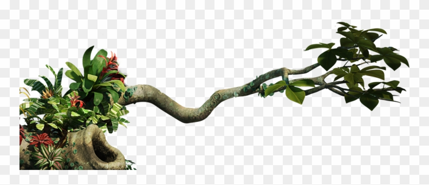 Branch clipart jungle. Tree png transparent