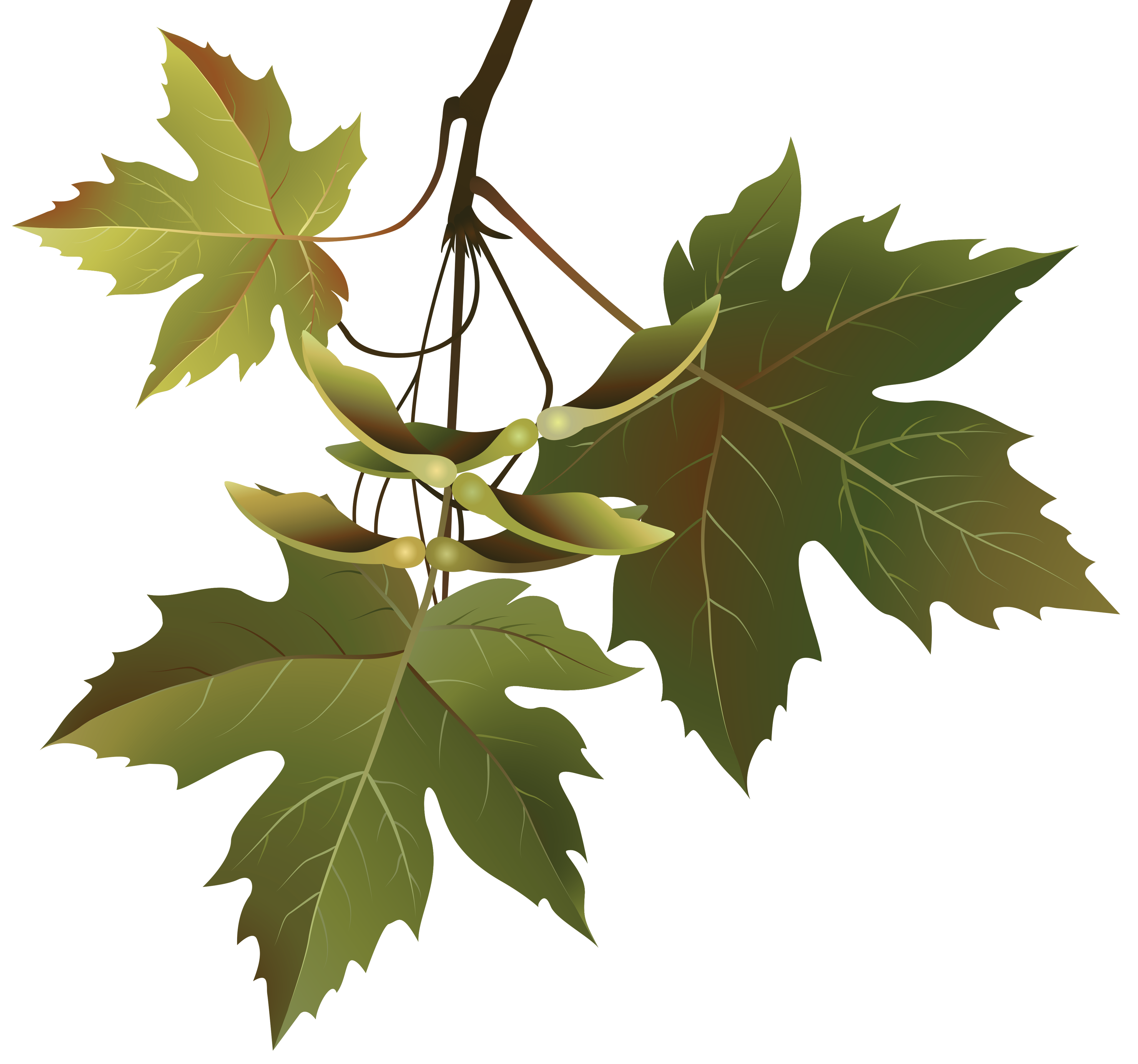 Autumn leaves png image. Branch clipart leave clipart