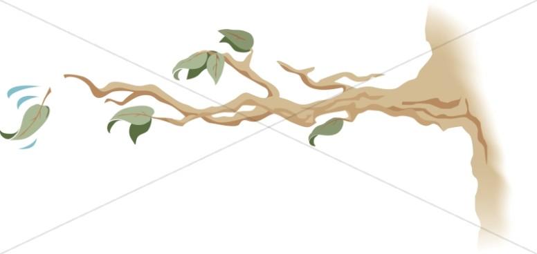 Branch clipart leave clipart. Leaf images graphics sharefaith