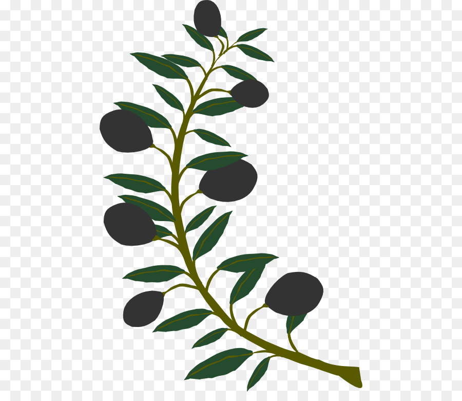 Branch clipart olive branch. Clip art png download