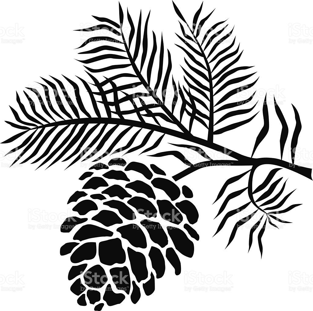 Pinecone clipart vector. On branch in black