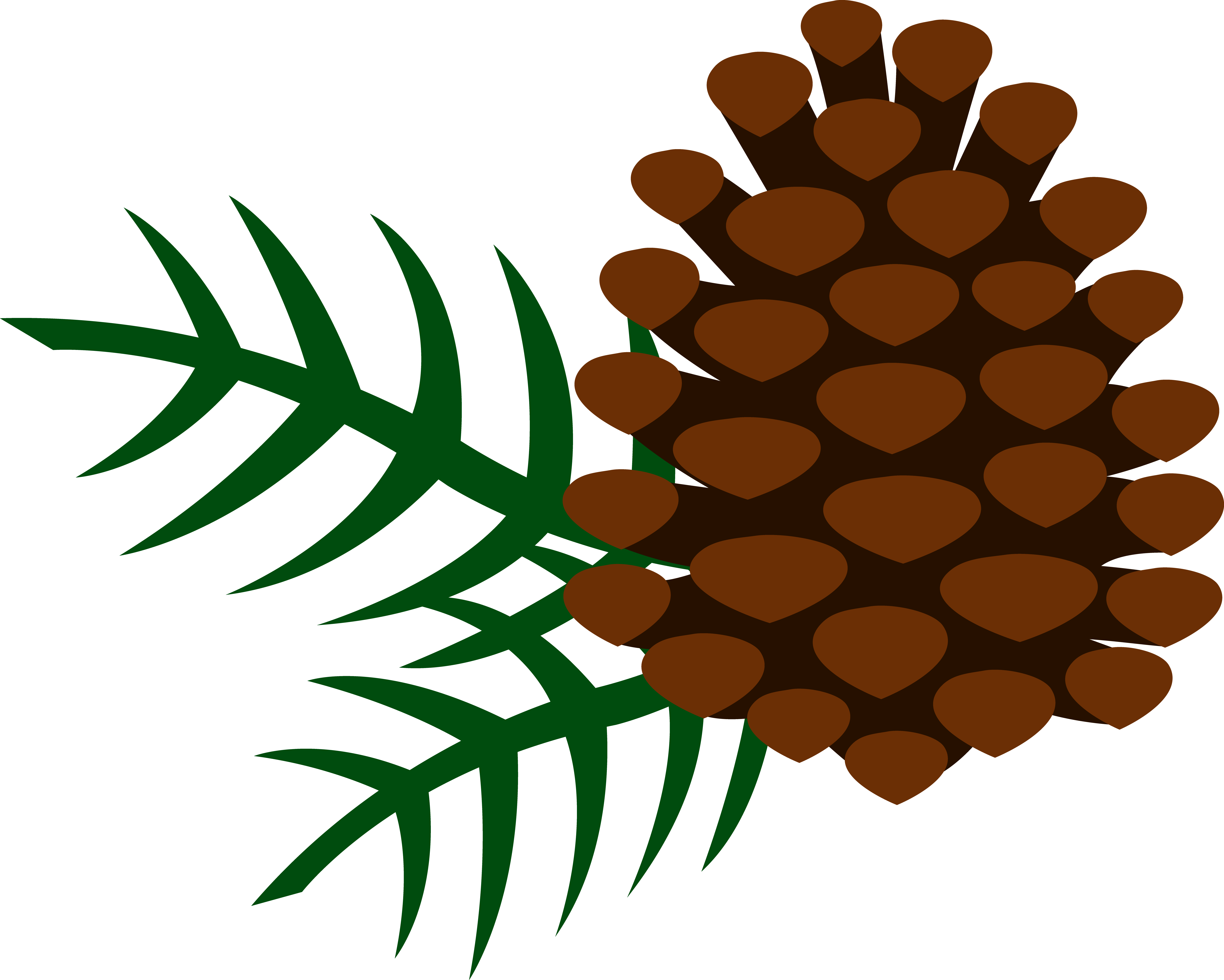 Cone and needles free. Pinecone clipart eastern white pine