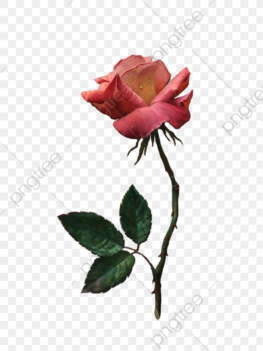 Rose png . Clipart roses branch