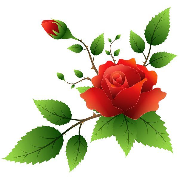 Clipart roses branch. On the white background