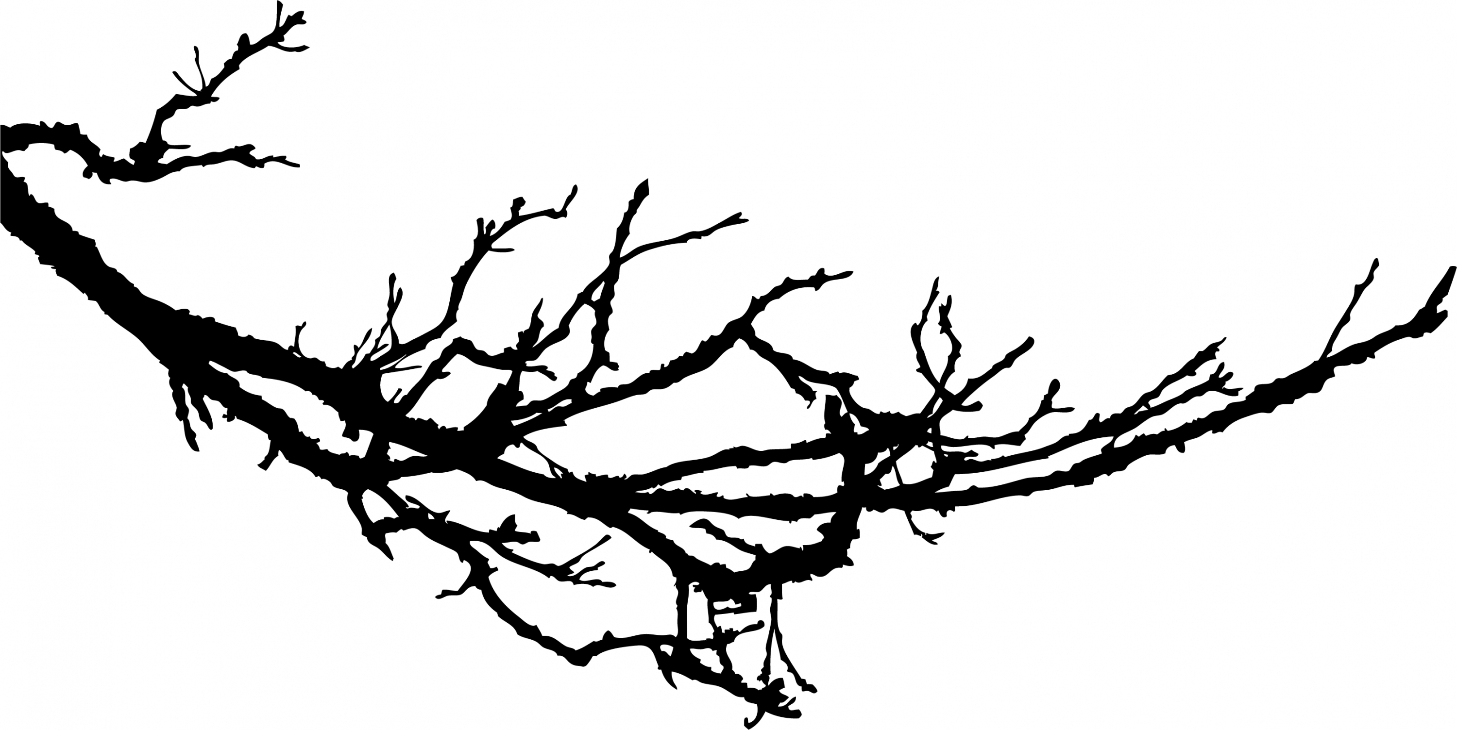 Tree silhouette images library. Branch clipart sanga