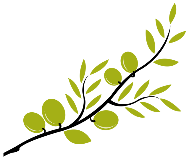 Olive leaf drawing at. Oil clipart oliver