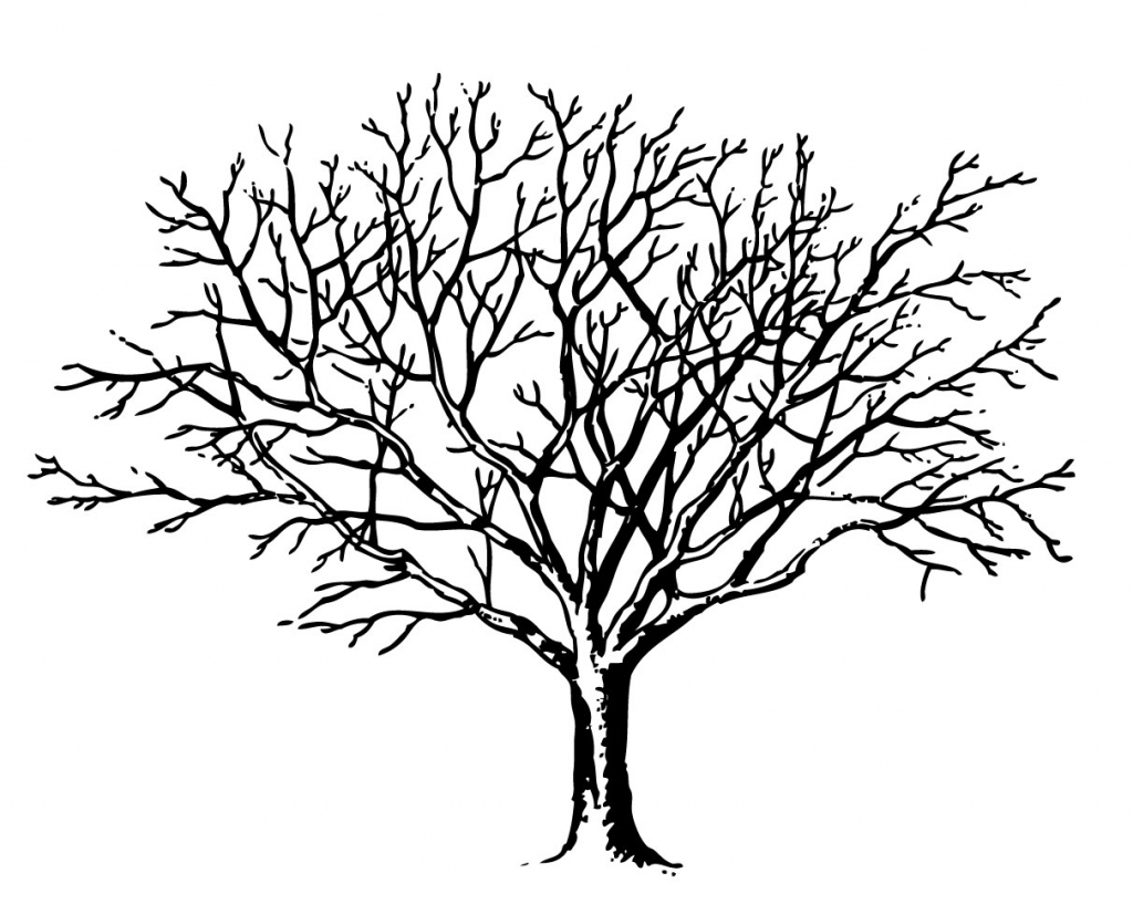 Branch clipart wood branch. Tree branches drawing at