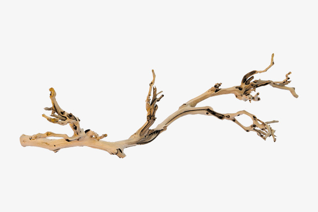 Branches classical tree noble. Branch clipart wood branch