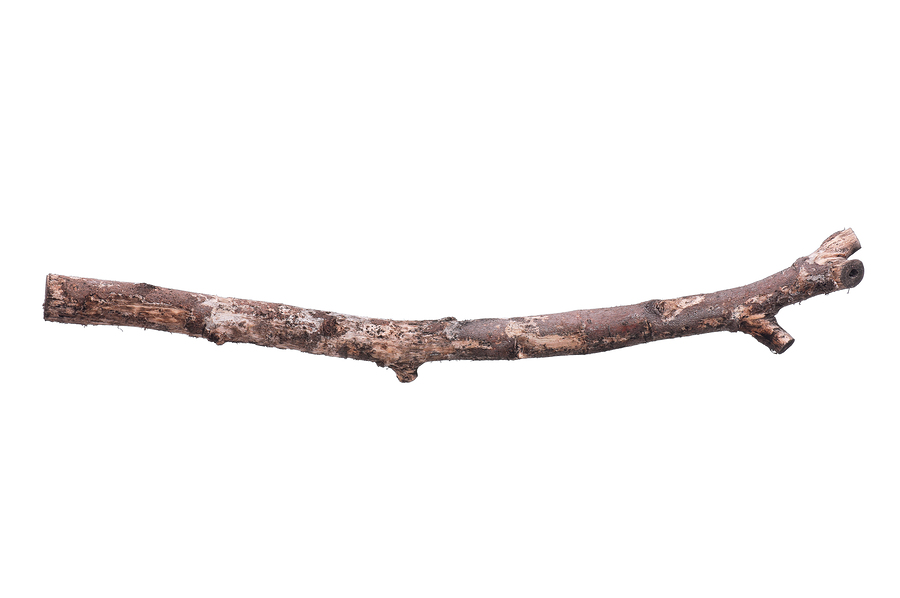 Bradly s double wiki. Branch clipart wooden stick