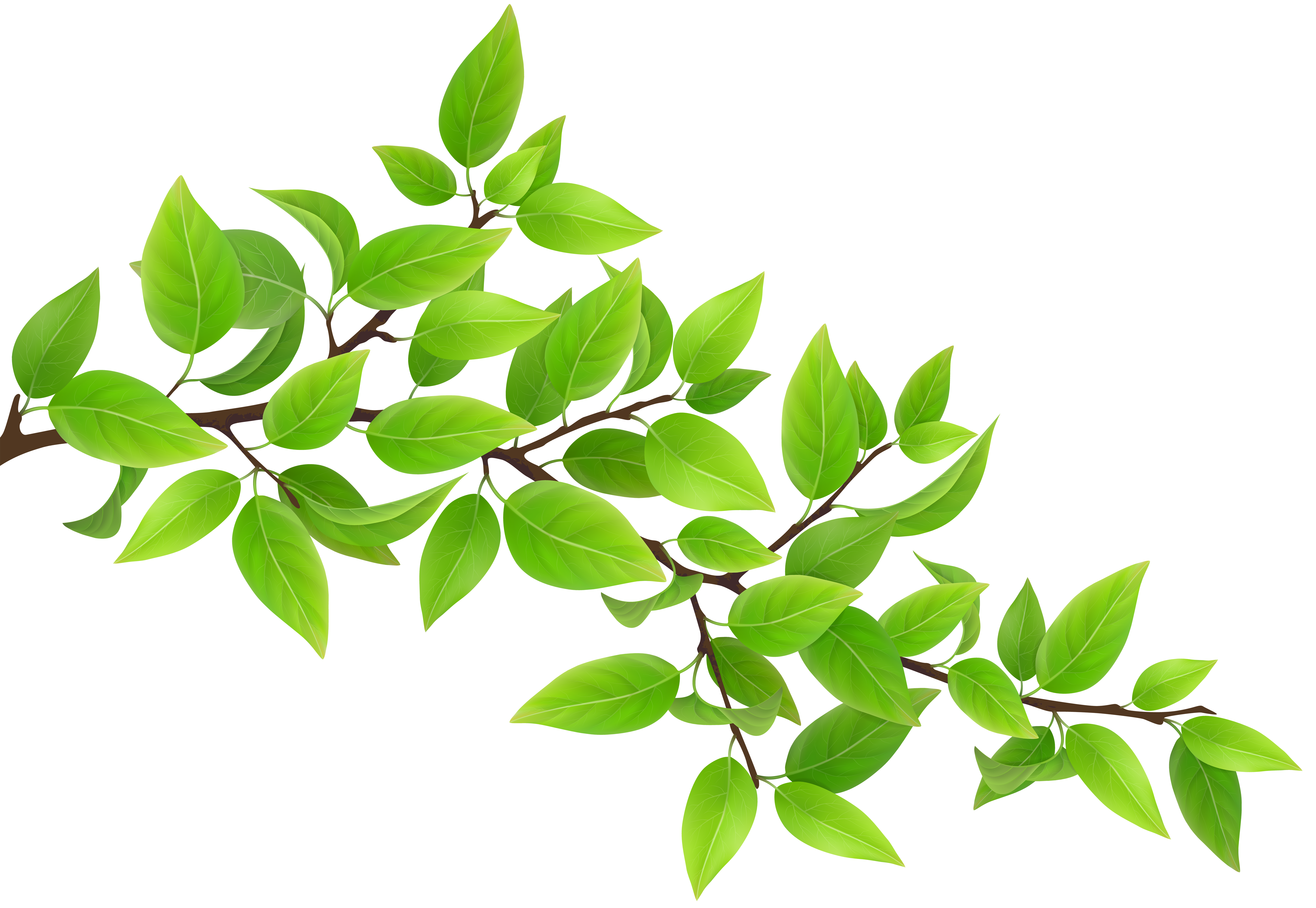 Green transparent png clip. Branch clipart
