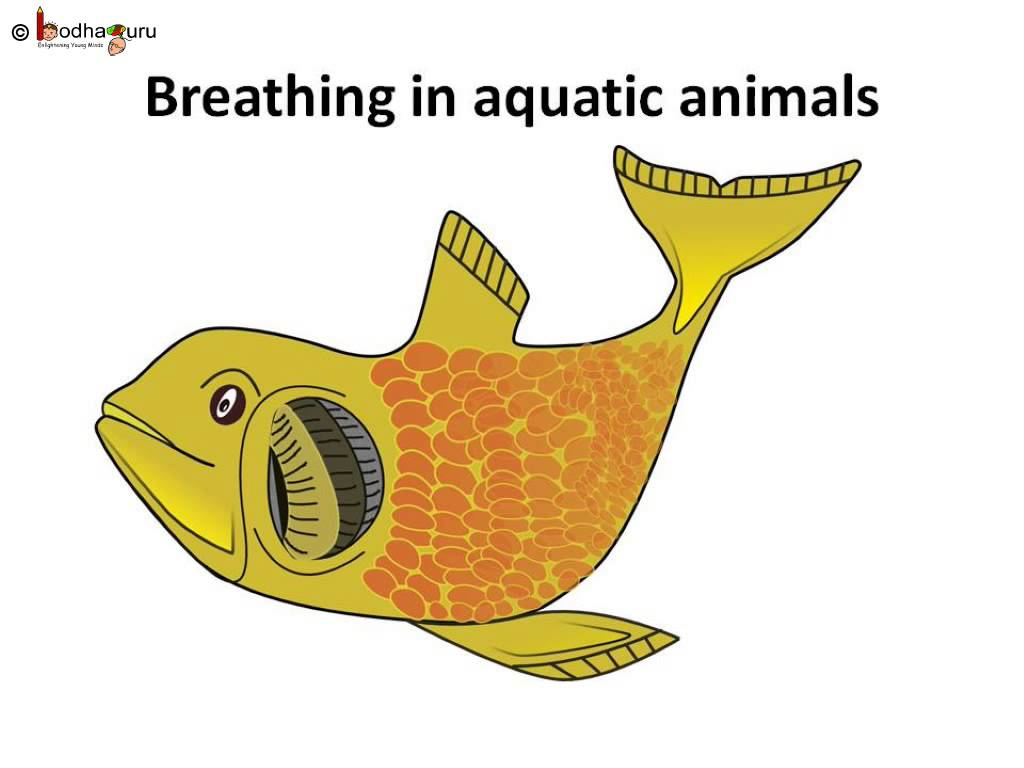 Breathing clipart animal breathing. Science in animals insects