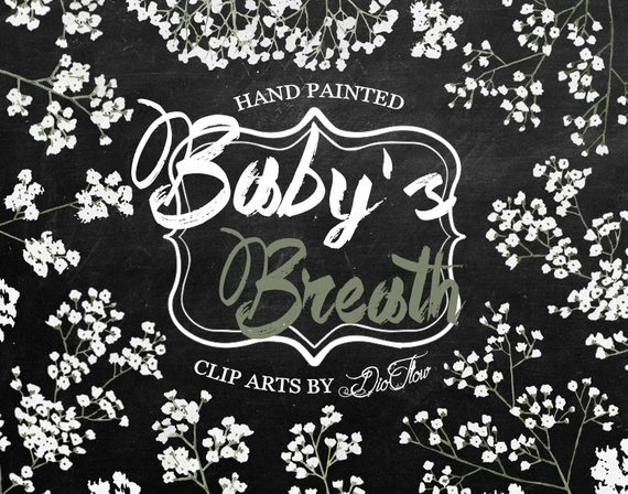 Breath clipart black and white. Baby s gypsophila flowers