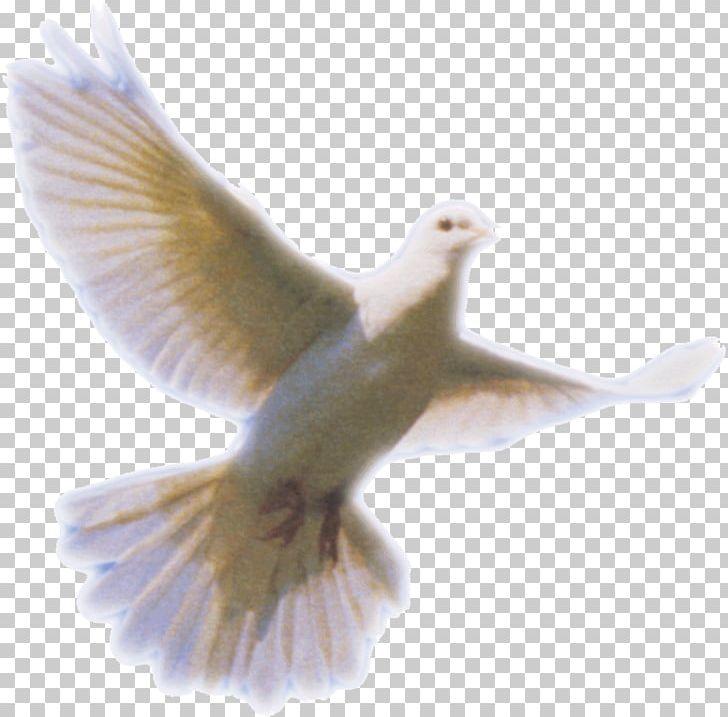 Columbidae doves as symbols. Breathing clipart holy spirit