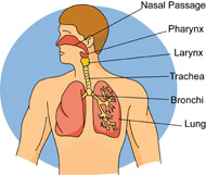 Breath clipart human breathing. Search results for breathe