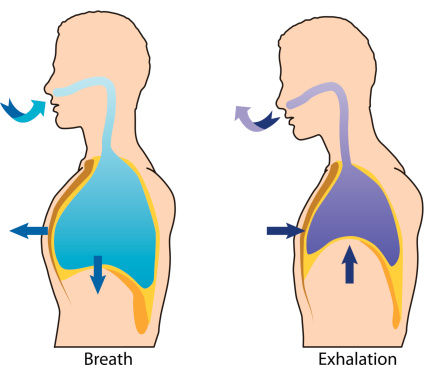 Breath clipart nose breathing. Importance of through our