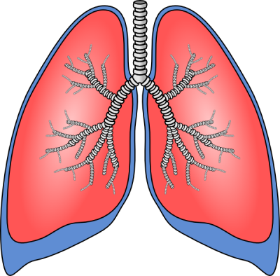 Download lungs free png. Breath clipart transparent