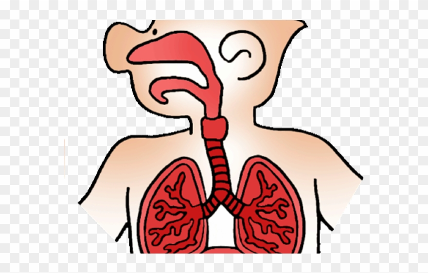 Relax respiratory therapy . Breathing clipart human breathing