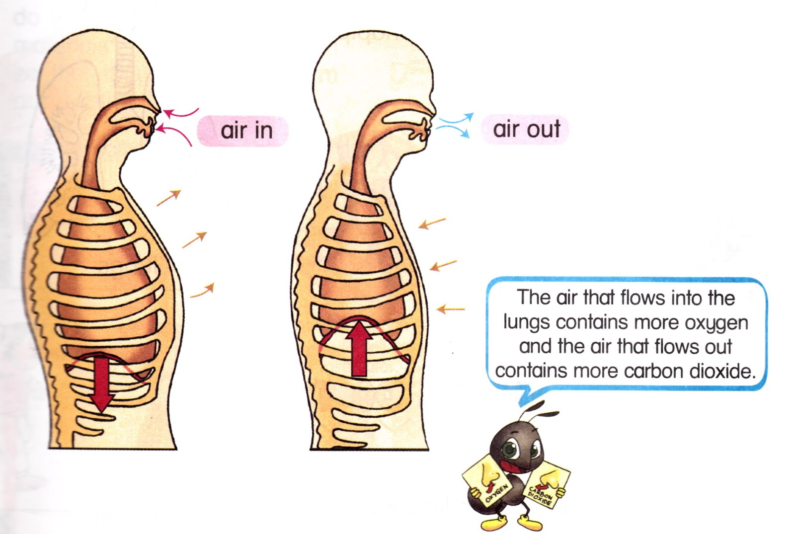 Science year . Breathe clipart human breathing