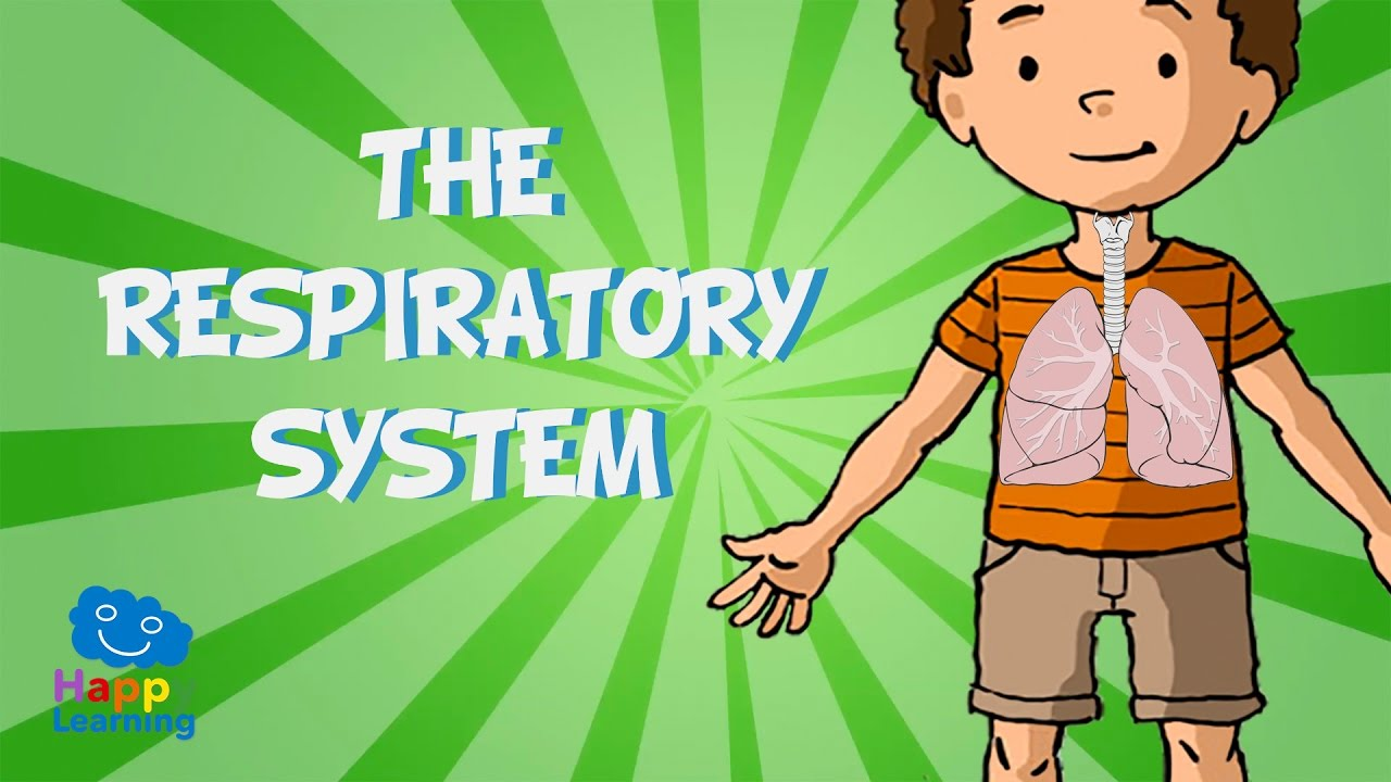 Breath clipart child breathing. The respiratory system educational