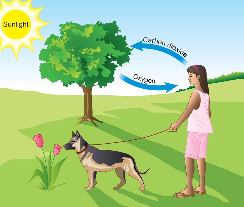 Breathe clipart oxygen. Carbon dioxide and energy