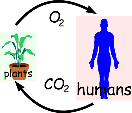 The carbon dioxide cycle. Breathe clipart oxygen