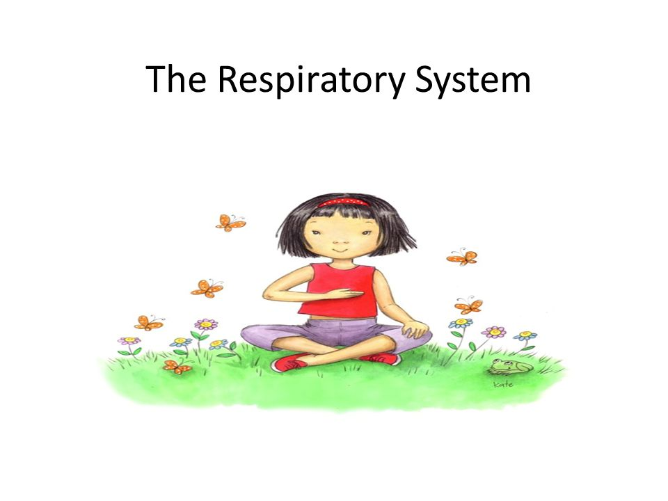Breathe clipart oxygen. The respiratory system why