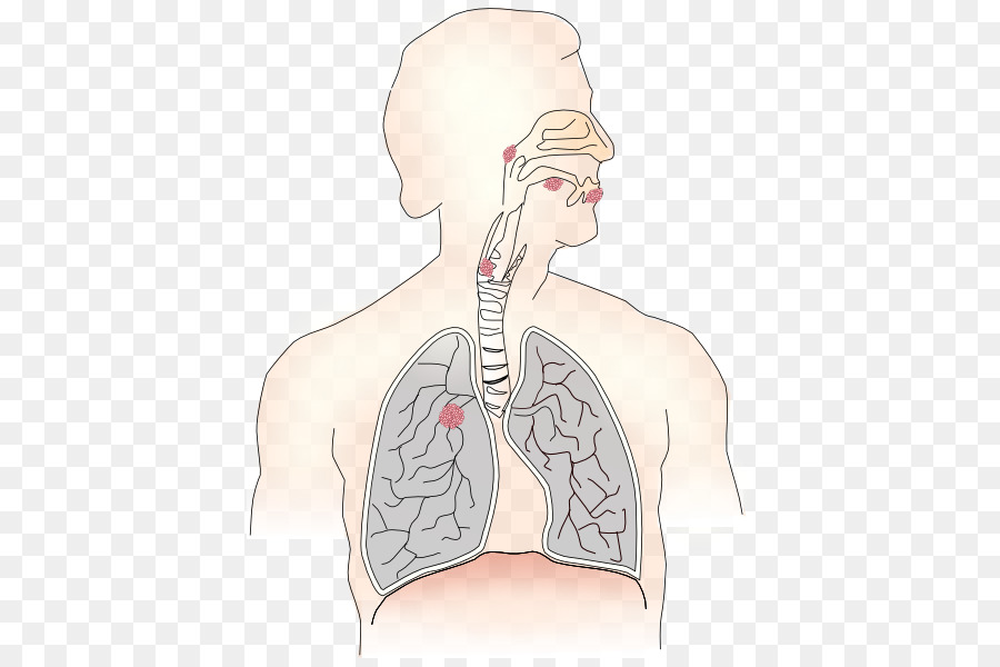 Breathe clipart respiration. Respiratory system therapist breathing