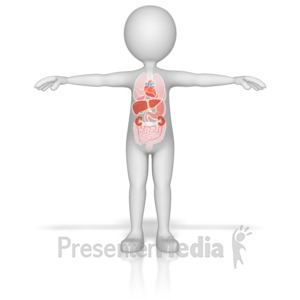Human lungs . Breathing clipart animated