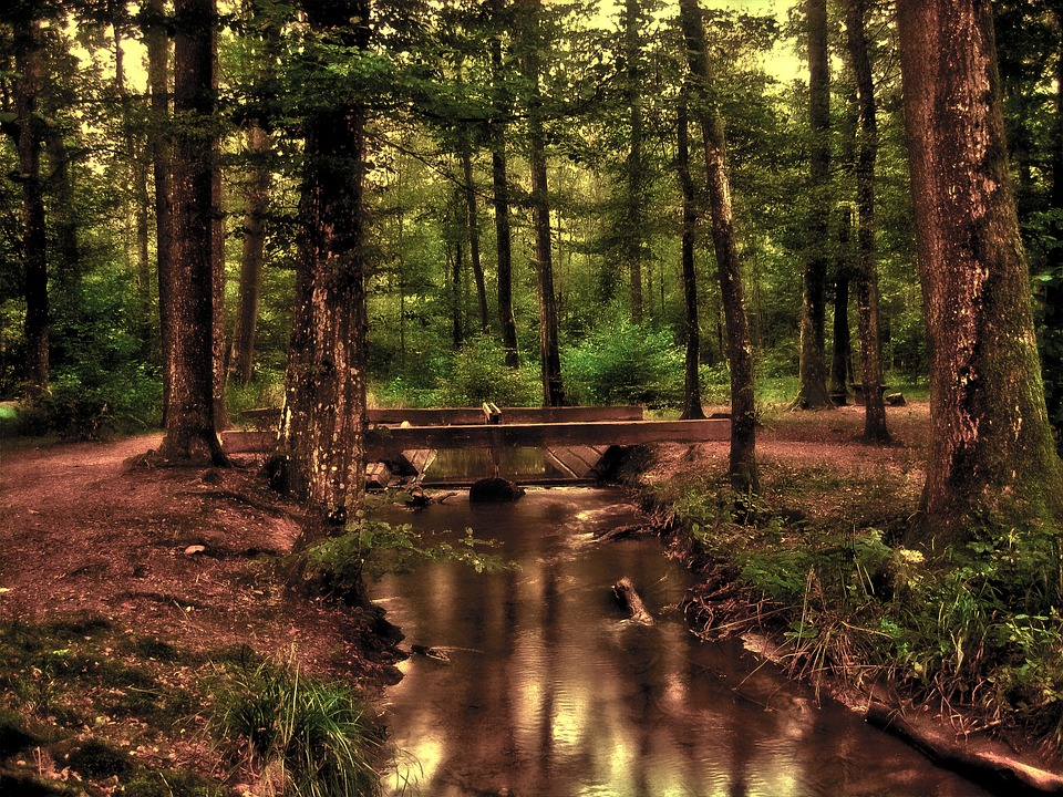 Free photo water running. Bridge clipart forest