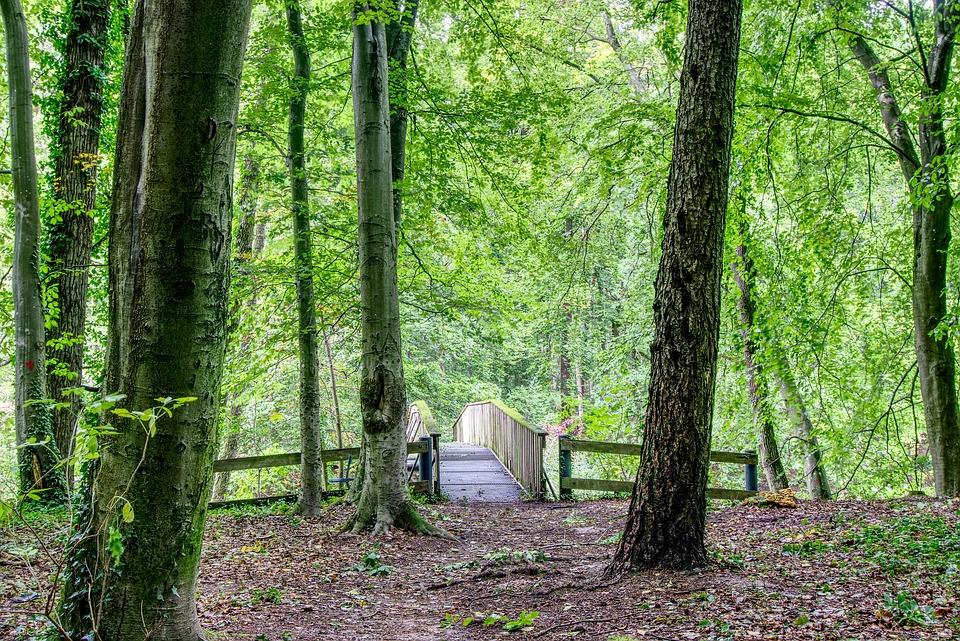 Bridge clipart forest. Cliparts shop of